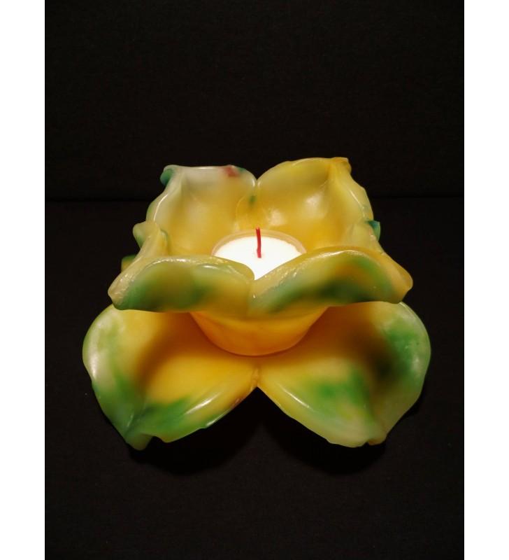Fleur de Bougie jaune/vert